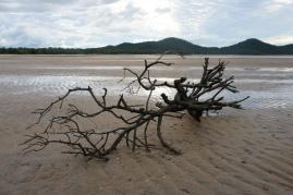 Low tide treasures
