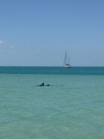 dolphins - Monkey Mia